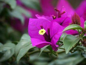 Ý nghĩa hoa giấy